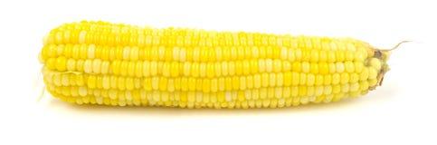 Свежие corns на белой предпосылке Стоковые Фото
