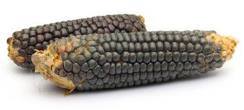 Свежие corns Стоковые Изображения RF