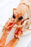 Свежие crayfish Стоковое Фото