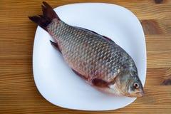 Свежие crucian рыбы Стоковое фото RF