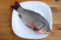 Свежие crucian рыбы Стоковые Фотографии RF