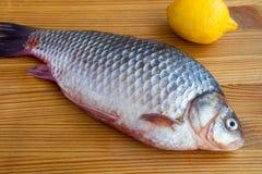Свежие crucian рыбы Стоковое Фото