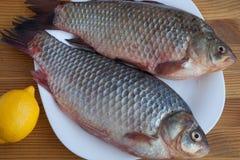 Свежие crucian рыбы Стоковая Фотография RF