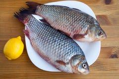 Свежие crucian рыбы Стоковые Изображения
