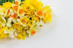 Свежие daffodils весны Стоковое фото RF