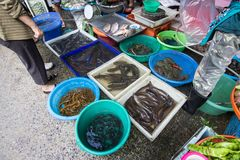 Свежие fishs на рыбном базаре Стоковое Изображение