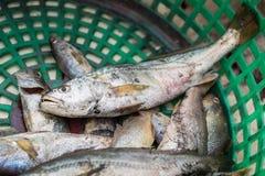 Свежие fishs Стоковое Фото