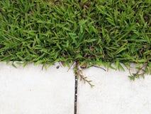 Свежие gras зеленого цвета весны Стоковые Фотографии RF