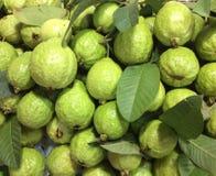 Свежие Guavas Стоковые Изображения RF