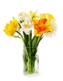 Свежие narcissus и тюльпаны Стоковая Фотография RF