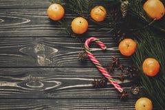 Свежие tangerines и тросточка конфеты пипермента с зеленой елью разветвляют Стоковые Изображения