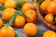 Свежие Tangerines с листьями Стоковая Фотография RF