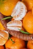 Свежие Tangerines с листьями Стоковое Изображение RF