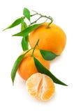 Свежие tangerines Стоковые Изображения