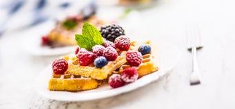 Свежие waffles с ягодами засахаривают листья мяты муравья порошка Стоковые Фото