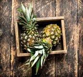 Свежий ананас в старой коробке Стоковое Изображение