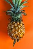 Свежий ананас на предпосылке стоковые фото