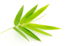 Свежий бамбук выходит граница изолированный на белую предпосылку, ботаническую Стоковые Фотографии RF