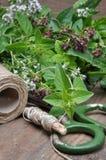 Свежий бальзам лимона трав, тимиан, мята на деревянной доске и аксессуары Стоковые Фото