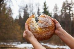 Свежий белый хлеб на предпосылке рук женщин леса взламывая стоковое изображение