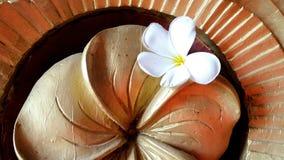 Свежий белый цветок на деревянной предпосылке Стоковые Изображения