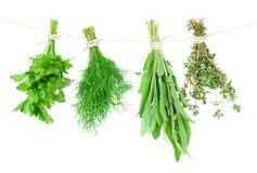 Свежий висеть трав Стоковое фото RF