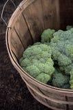 Свежий выбранный брокколи в корзине стоковые фотографии rf