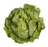 свежий головной салат стоковое фото