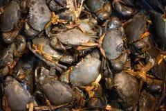 Свежий голубой рак на рынке морепродуктов Стоковое фото RF