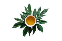 Свежий душистый и полезный травяной или зеленый чай в кружке при листья завода изолированные на белой предпосылке Стоковая Фотография