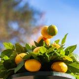 свежий желтый цвет лимонов стоковые фотографии rf
