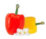 Свежий желтый и красный перец паприки изолированный на белизне Стоковая Фотография