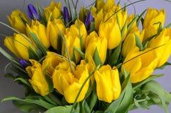 свежий желтый цвет тюльпанов стоковое изображение