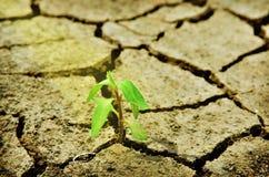 Свежий зеленый вал через треснутую почву Стоковая Фотография