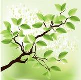 свежий зеленый вал иллюстрация штока