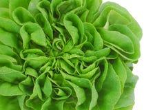 свежий зеленый головной салат Стоковая Фотография RF
