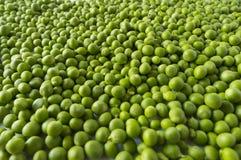 Свежий зеленый горох в стручке на белой предпосылке Стоковая Фотография RF