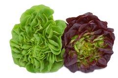 свежий зеленый красный цвет салата головок Стоковая Фотография RF