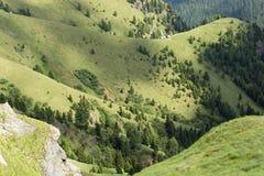 Свежий зеленый ландшафт доломитов в июне Стоковое Фото