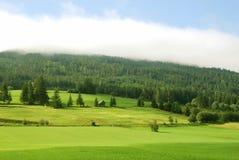 свежий зеленый ландшафт Стоковое Изображение RF