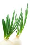 свежий зеленый лук Стоковые Изображения