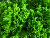 Свежий зеленый салат выходит близко вверх на взгляд сверху стоковая фотография