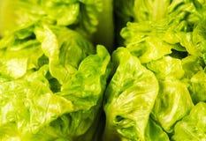 Свежий зеленый салат изолированный на черной предпосылке стоковая фотография
