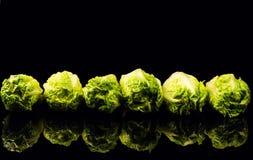 Свежий зеленый салат изолированный на черной предпосылке стоковые изображения