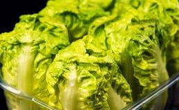Свежий зеленый салат изолированный на черной предпосылке стоковое изображение