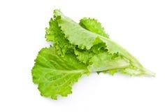 свежий зеленый салат салата стоковые изображения rf