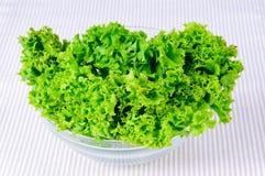 свежий зеленый цвет выходит салат Стоковые Фотографии RF