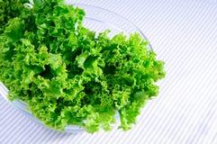 свежий зеленый цвет выходит салат Стоковое Изображение RF