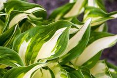 свежий зеленый цвет травы Стоковое Изображение RF