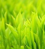свежий зеленый цвет травы Стоковые Фотографии RF